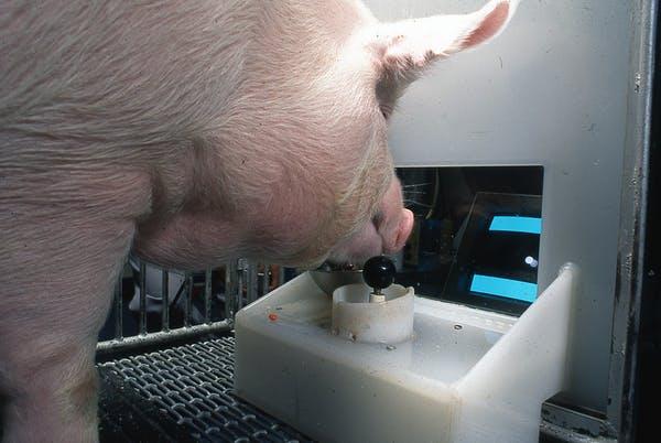 Jugando a la Play con Porky